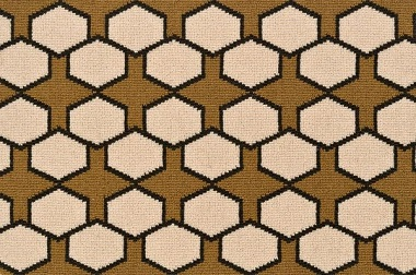 Carapace – Brown
